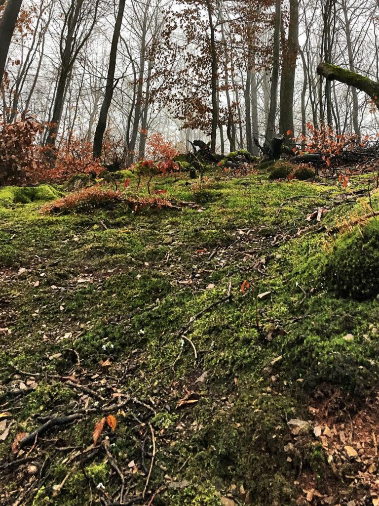 Moos, Wald, Bäume, Harz, Laub