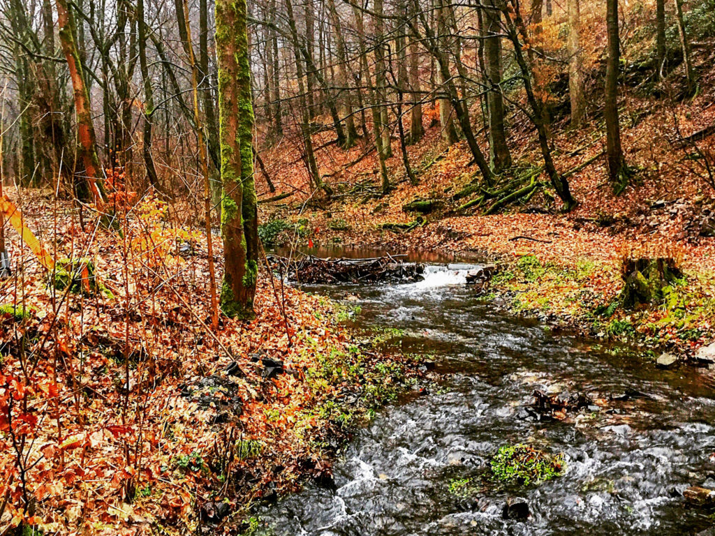 Wald, Harz, Bäume, Bach, Laub, Winter, Herbst, Moos