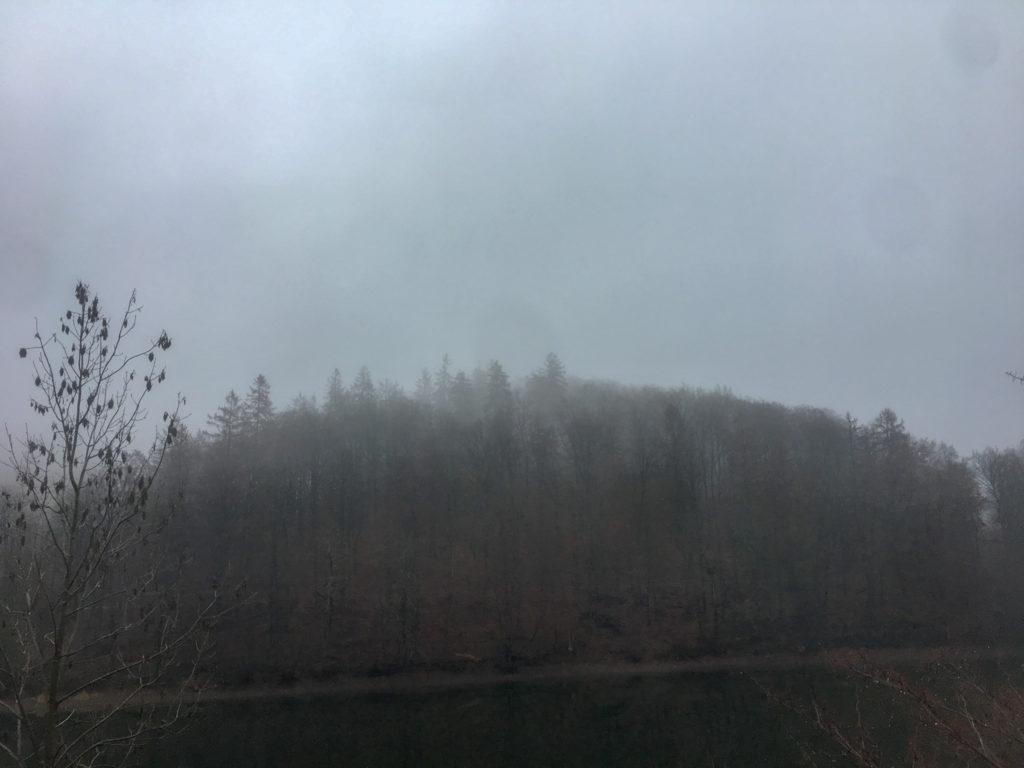 Nebel, Bäume, Harz, Wald, Wiesenbeker Teich