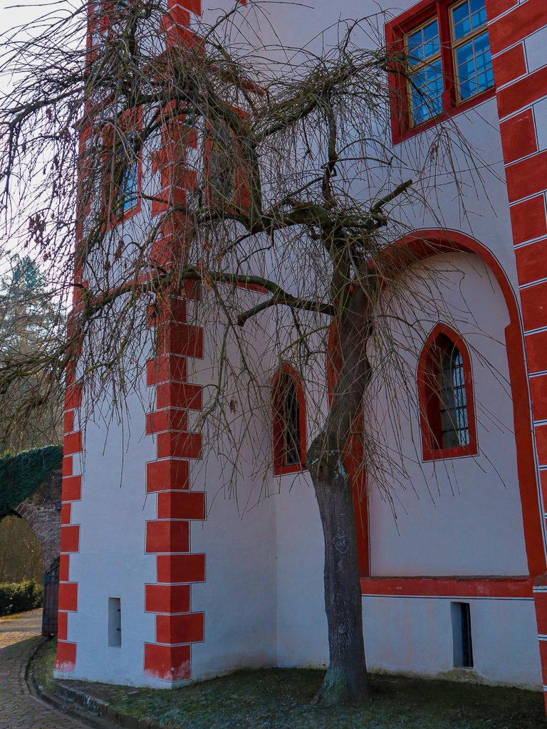 Miltenberg, Schloss-Berg, Burg, Baum
