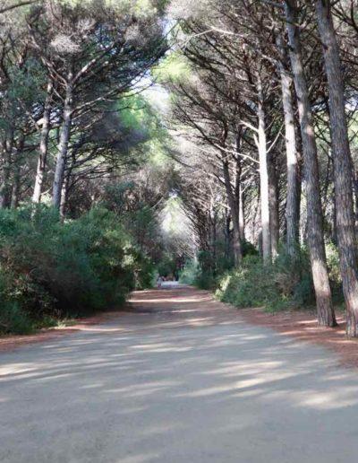 Durch den Pinienwald vom Campingplatz zum Meer