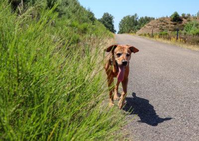 Wir lieben lange Spaziergänge, auch wenn es warm ist und die Zunge fast bis zum Boden hängt!