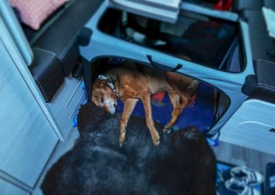 Im neuen Wohnmobil ist genug Platz für Nero, ob mit oder ohne Box, hier fühlt er sich wohl!