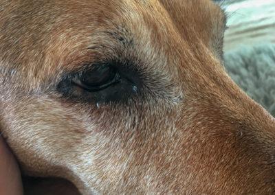 Neros letztes Foto - können Hunde weinen? Bevor wir zum Tierarzt gefahren sind, hatten wir beide Tränen in den Augen.