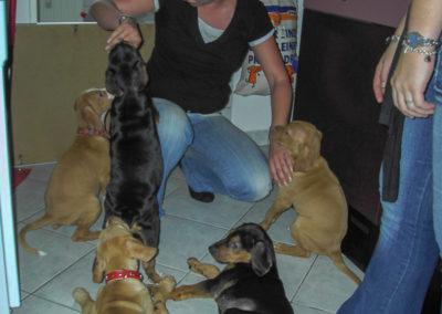 Nero mit seinen Geschwistern - das war der erste Kontakt zum neuen Familienmitglied