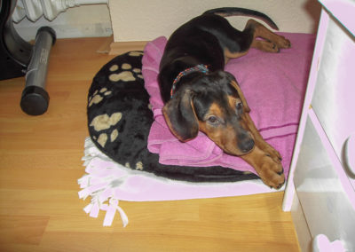 Ins Bett durfte er nicht, aber einen Platz im Schlafzimmer hat er schon bekommen!