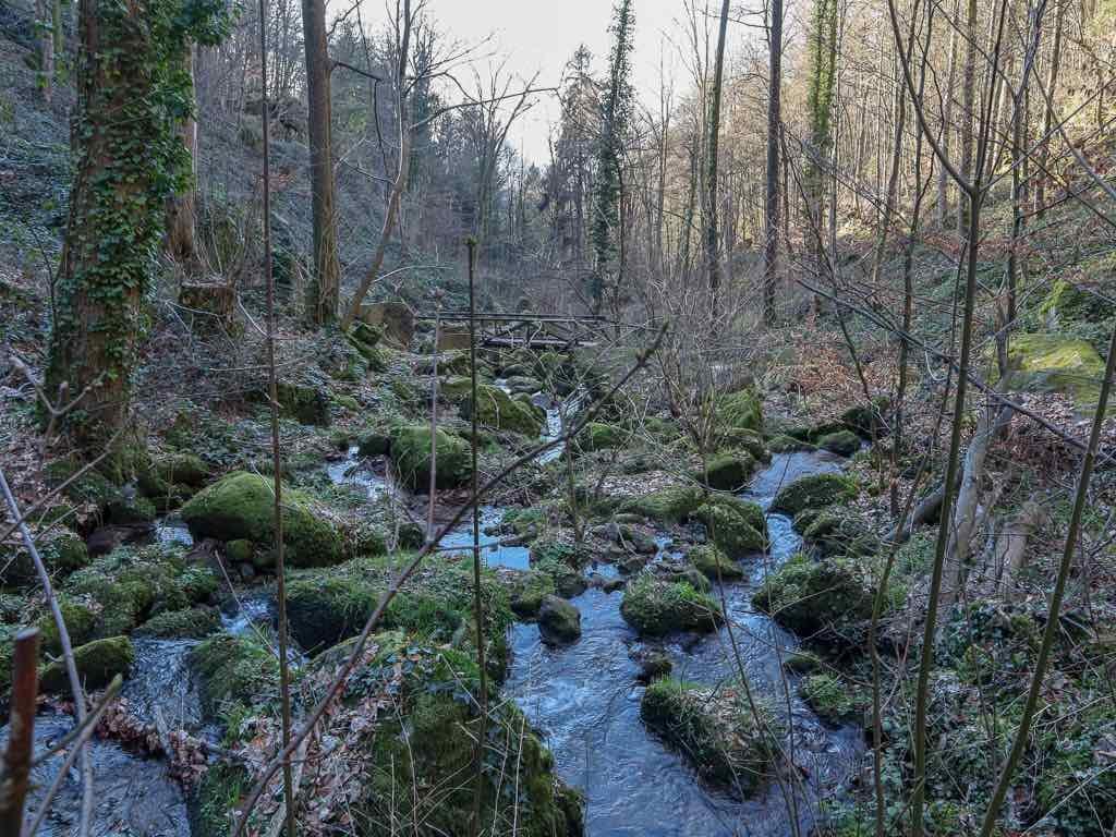 Sasbachwalden, Baden-Württemberg, Ortenau, Wanderung, Schnapsbrunnenweg , AbenteuerWomo, Wald, Natur, Bäume