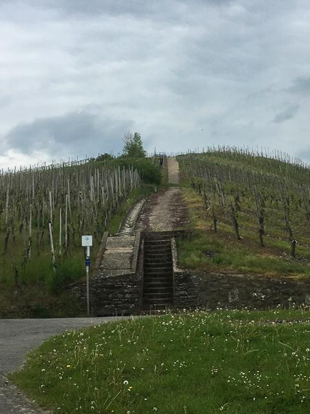 AbenteuerWomo, Neumagen-Dhron, Weinberg, Rheinland-Pfalz
